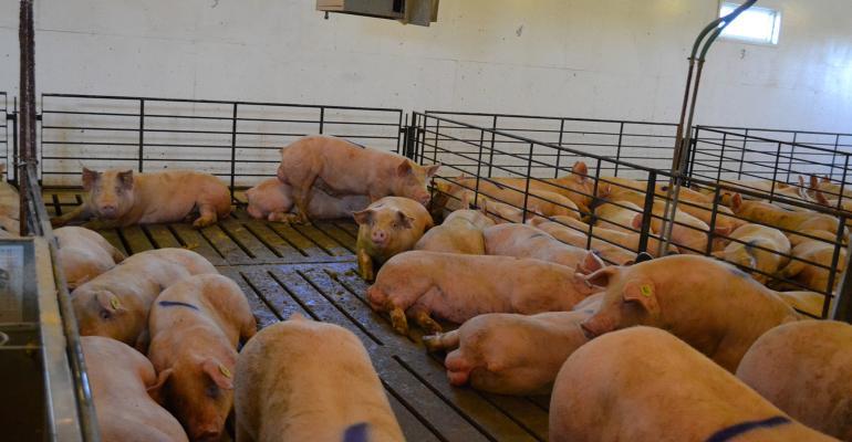 pen of boars