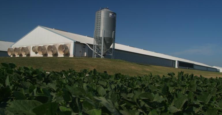 soybean field in foreground of hog barn