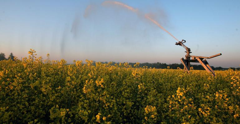 Field of canola being irrigated