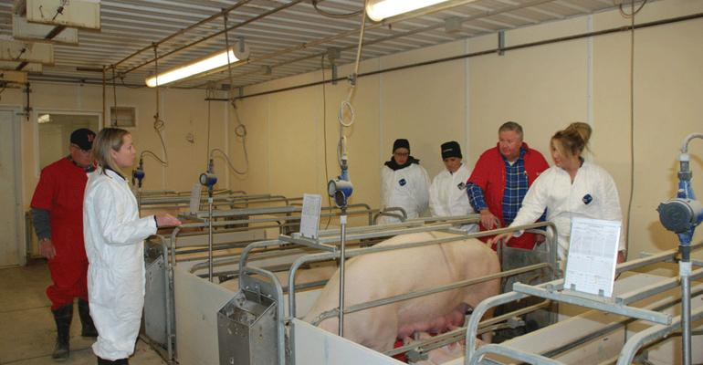 Ann McDonald (left), manager of animal welfare and specialty program on-farm certification for Smithfield Foods, instructs a group of auditors during recent training for the Common Swine Industry Audit to observe the care of the animals as well as the upkeep of the facilities. Auditors are (from left) Bob Revell, Validus-IMI Global; Lori Ernst, Food Safety Net Services; Ruth Woiwode, Food Safety Net Services; David Lyon, Landmark Environmental Services; and Stephanie Wisdom, Cactus Family Farms.