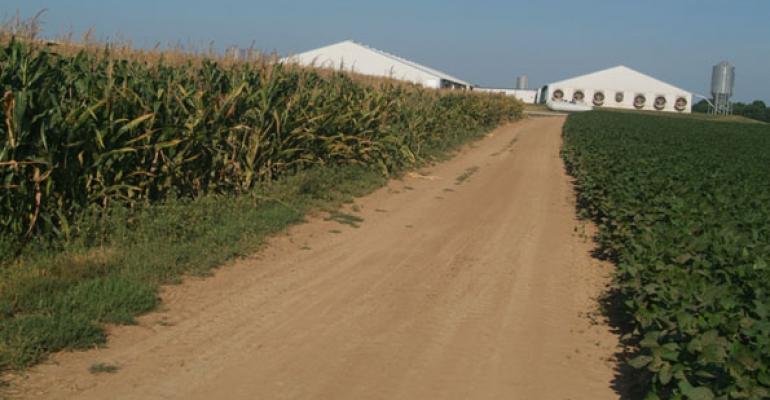 corn and soybean fields by hog barns