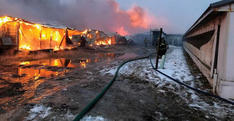 It took less than two hours for the electrical fire, which began in Room 11, to destroy Ed Reed's farrowing barn. While there were walls standing, the entire roof and complex had burned, and Reed Family Farms had lost all 500 sows inside.