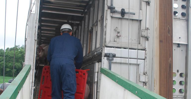 Man herding pigs onto a trailer