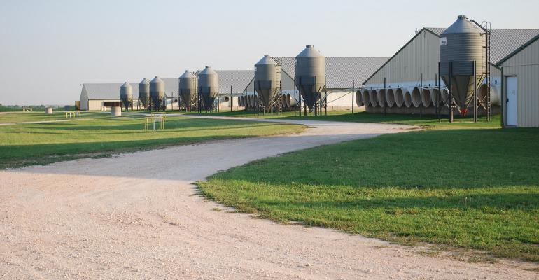 A row of metal hog barns