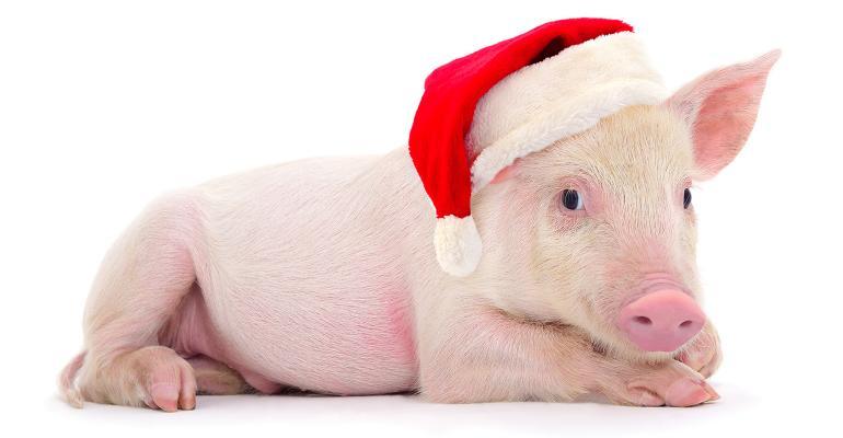 pig in a santa hat