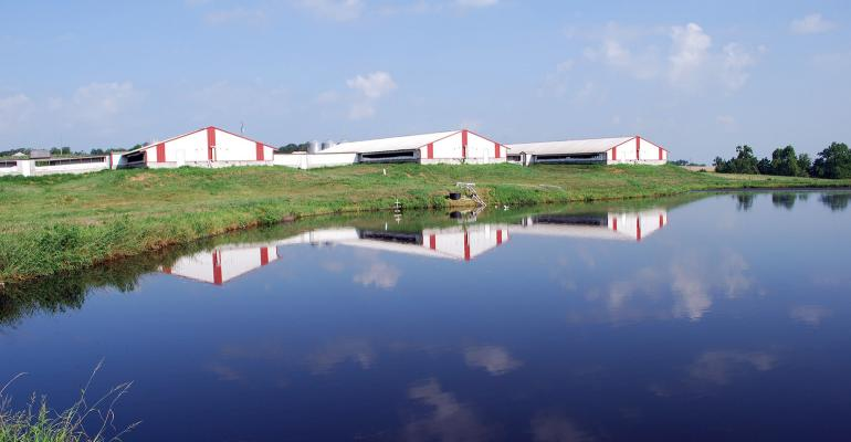 Three hog barns reflected on a manure lagoon in the foreground