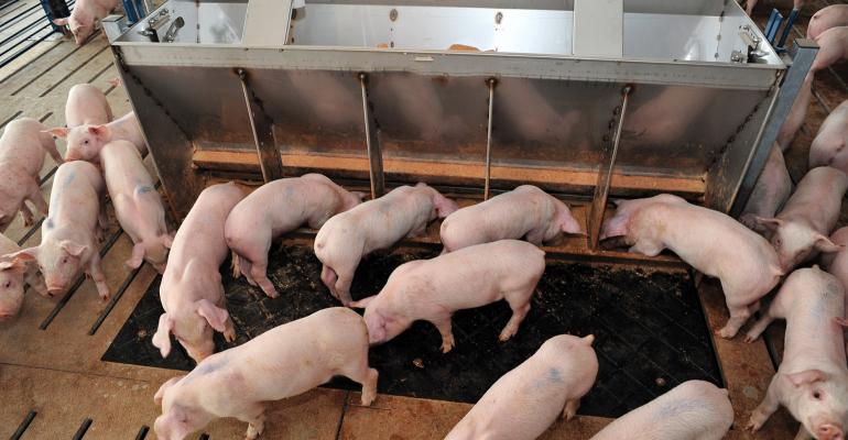 "Pork producers, nutritionists and veterinarians need to understand the common ""gut health"" measurements reported in literature and how to interpret their relevance to improving performance in pigs."