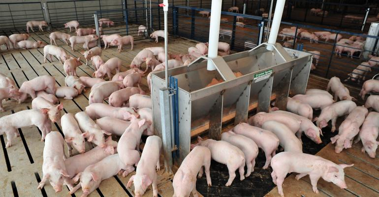 pigs at a feeder in a barn on slatted floor