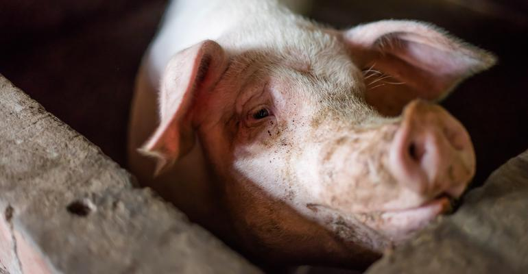 China has plenty of pork right now but the situation will not last long.