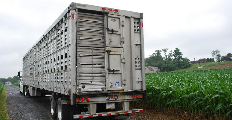 Semi with livestock trailer leaving a hog operation