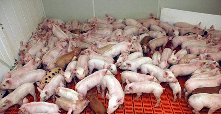 Picture of a pen of weaned pigs.