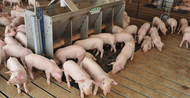 White pigs surrounding a feeder in a pen.