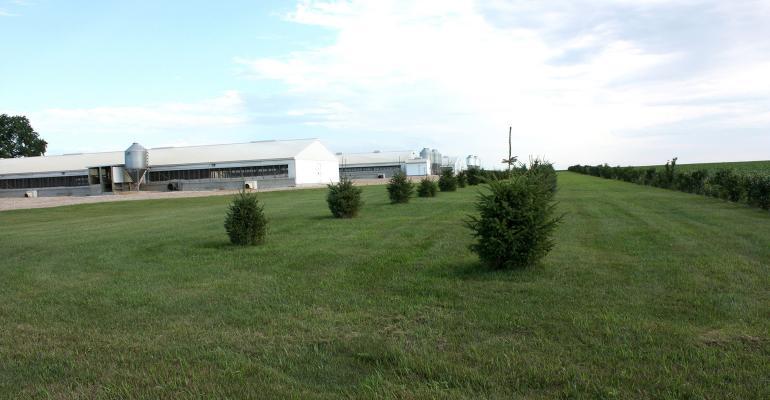 NHF-windbreak-by-hog-barns-NPB-1540.jpg