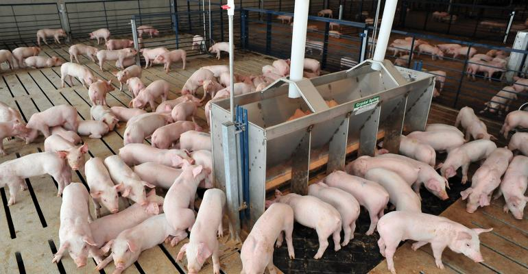 When broadly treating swine herds with antimicrobials, could we be reducing microbial diversity in the gut and harming beneficial microbes?