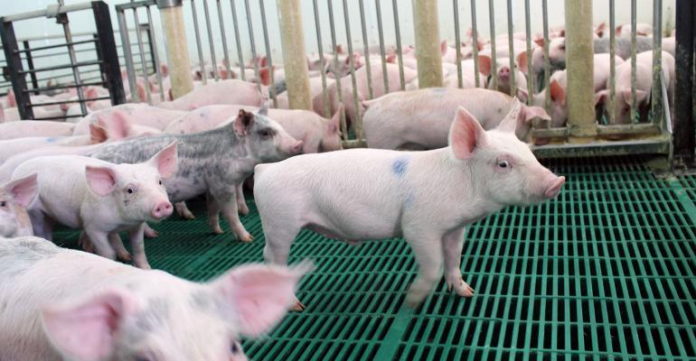 should we be concerned about lipid quality in nursery pig