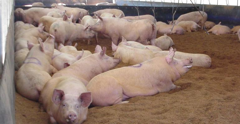 effects of 3 methods for weaning sows into group housing