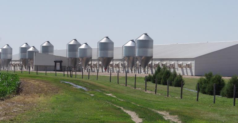 Pig Farm (1).jpg