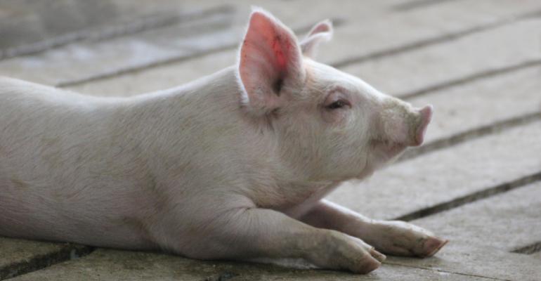 Pig-Slats