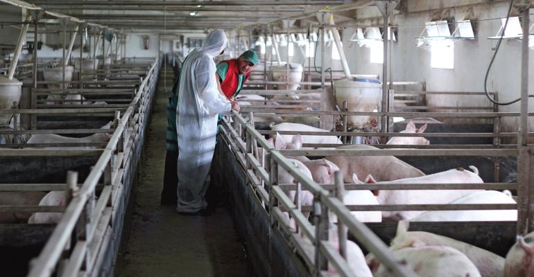 Veterinarian with pig caretaker