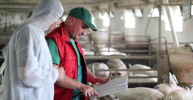 Veterinarian and farmer in hog barn