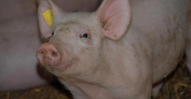 Vetmeduni swine.jpg