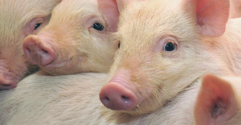 Have swine diets kept pace with nutrition and nutrient availability Recent research shows that mineral levels in hog diets might just be the next leap in nutritional evolution