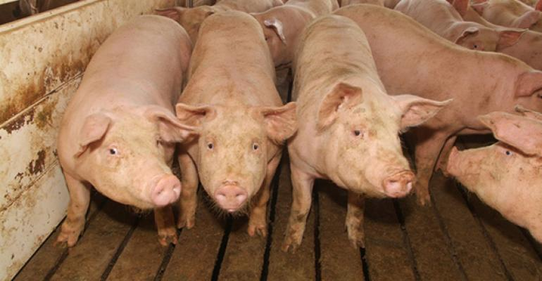 Record hog slaughter stresses packing capacity.