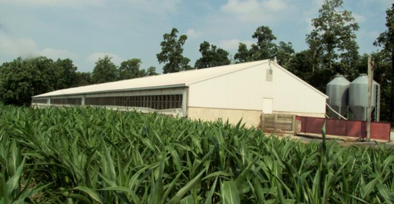 A hog barn with a corn field along side