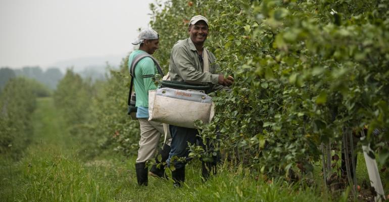 farmworker orchard USDA.jpg