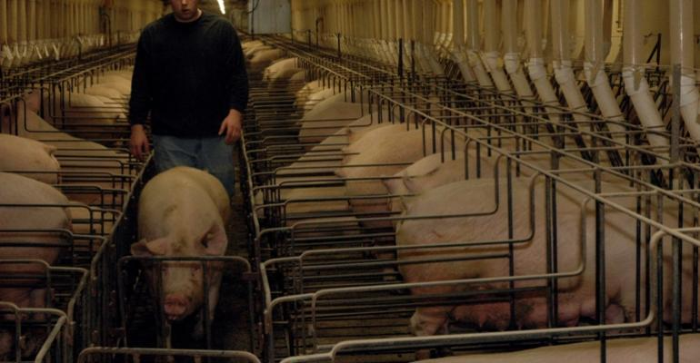 Moving a sow