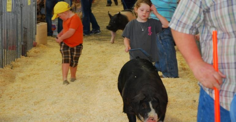 Future pork producers have been taking part in the youth swine shows during World Pork Expo