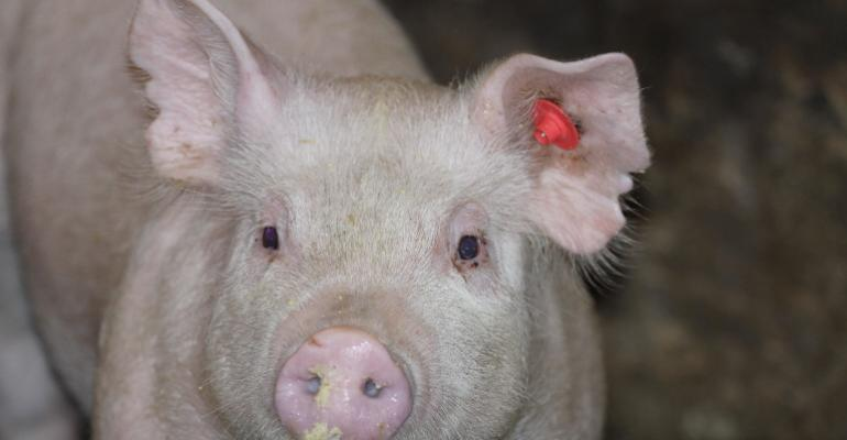 The ldquoPrettiest Pigrdquo finalists have been named in the National Hog Farmer ldquoHogs are Beautifulrdquo Photo Contest