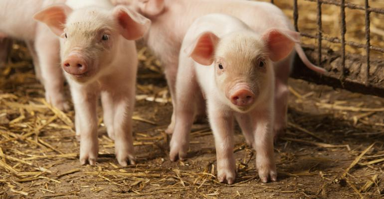 little-pigs-ab-vista-cropped.jpg
