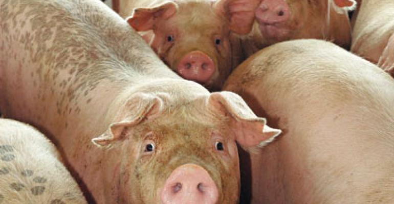 market hogs