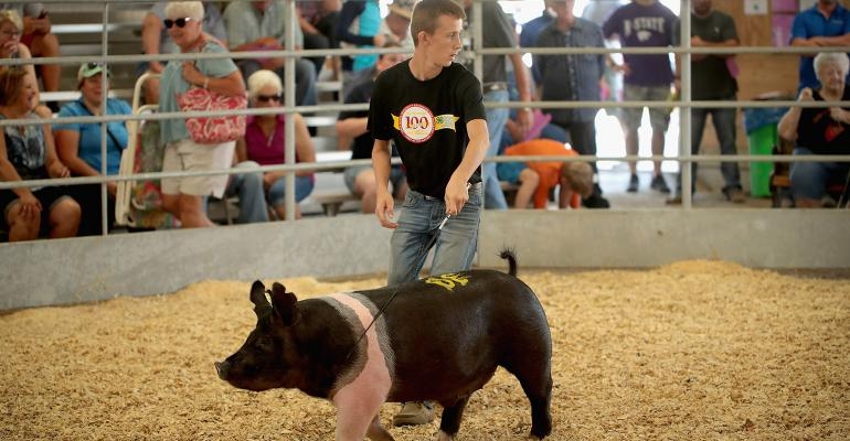 Young man showing a Hampshire hog at a county fair