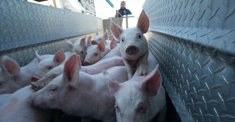 nhf-npb-unloading-pigs.jpg