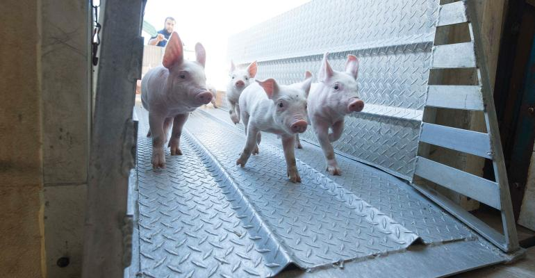 Since the 2017 veterinary feed directive went into effect, the search has been ongoing for antibiotic alternatives that can help piglets recover following transport and weaning stress.