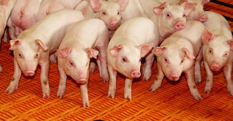 nursery-pigs.jpg