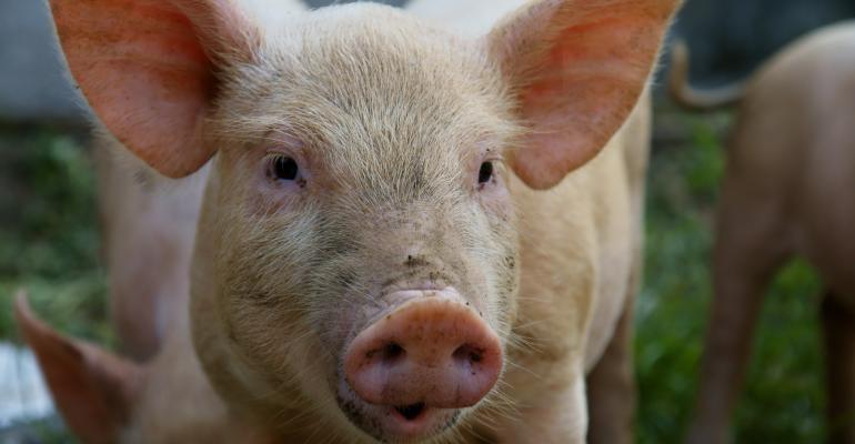 pig in China-shutterstock_36506221.jpg
