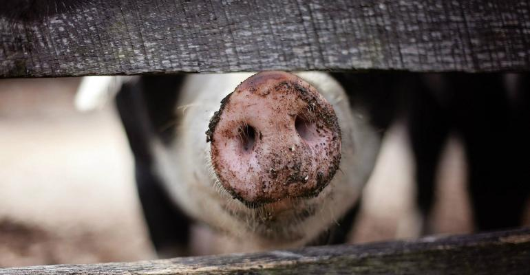 pig snout farm NHF FDS.jpg