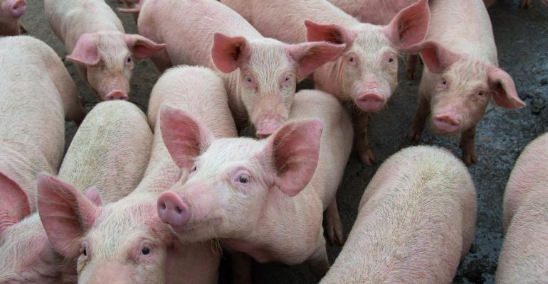 pig-farm-GettyImages-1164699087.jpg
