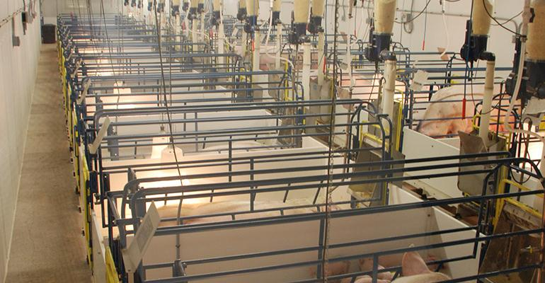 Viewing windows allow visitors to experience modern hog production practices without jeopardizing strict biosecurity at South Dakota State Universityrsquos new Swine Education and Research Facility