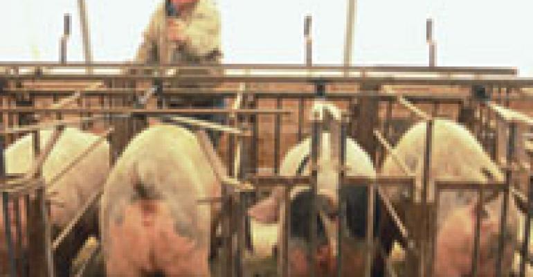 Free Stall Eases Feeding, AI Chores
