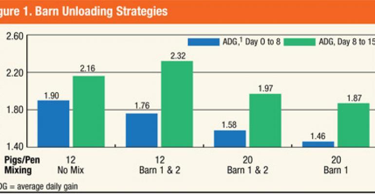 Kansas State Finishing, Marketing Strategies Can Improve Barn, Pig Efficiencies