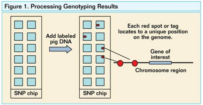 Understanding Genetic Disease Resistance
