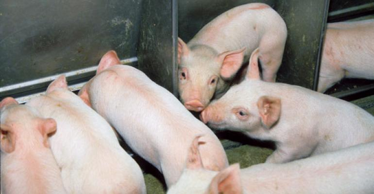 Keeping Pigs Healthy Requires Prompt Treatment and Training of Employees