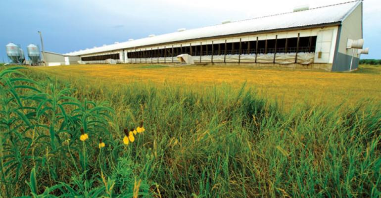 Designing 'greener' pig barns