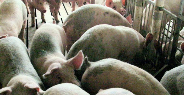 Price Volatility Tempers Hogs and Pigs Projections