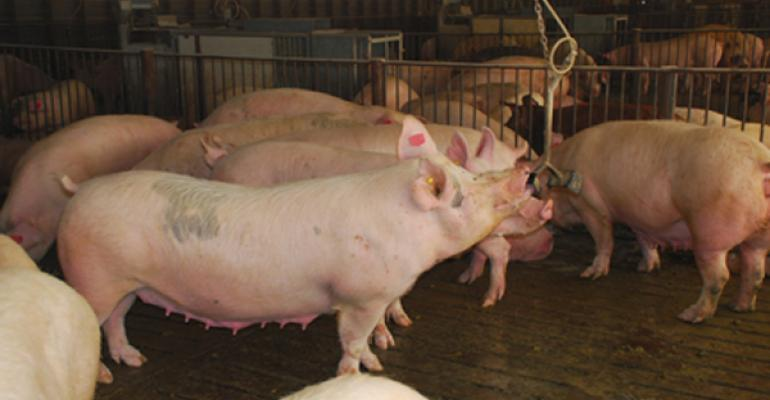 Hog Producers Take Prudent Path