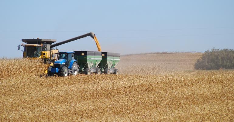 USDA Estimates Corn Prices Drop to $5/Bushel